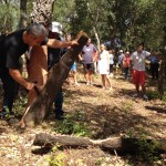 Visit to the extraction of the bark from cork oaks in Llofriu. Photo: RETECORK