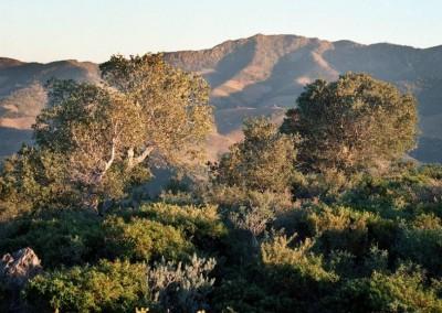 Naturgebiet Von Nationaler Bedeutung La Albera