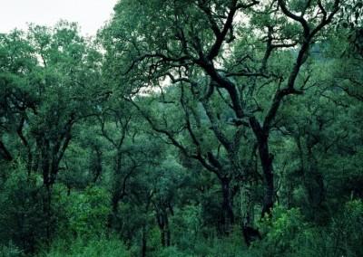 Parco Naturale del Montseny