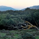 Parco Naturale Estrecho. Tarifa, El Bujeo. Foto: Lluís Català