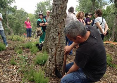 Festa da recolha da cortiça de Llofriu, Les Gavarres