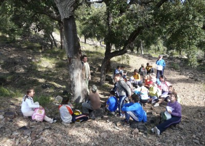 Walking through the cork oak forests in the Sierra de Espadán